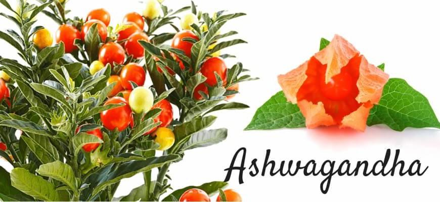Ashwagandha_(1)