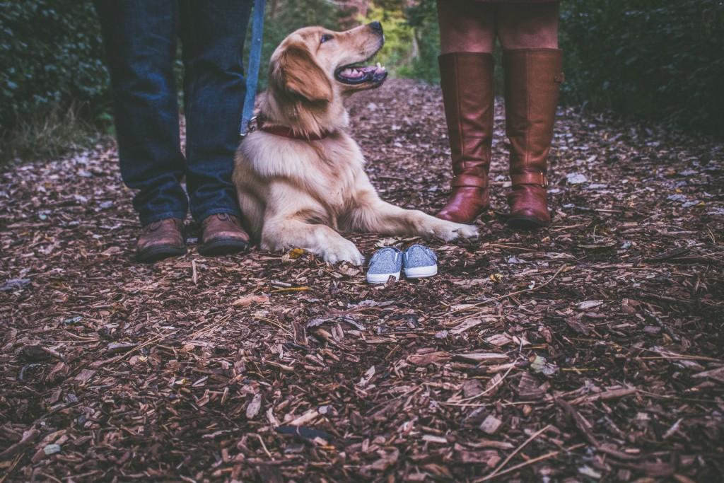 blur-canine-close-up-412537